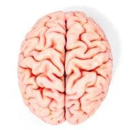 brain-on-white-background