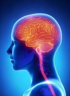 human-brain-colored-orange-against-blue-background