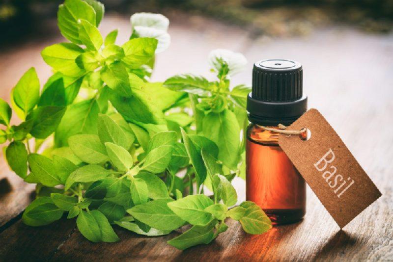 feslegen yagi - alerji tedavisi - bitkisel yaglar